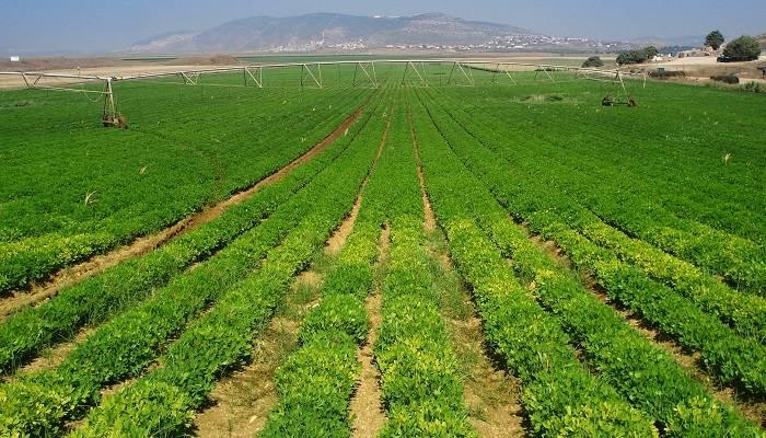 解决好这3个关键词,我国或成世界农业科技中心