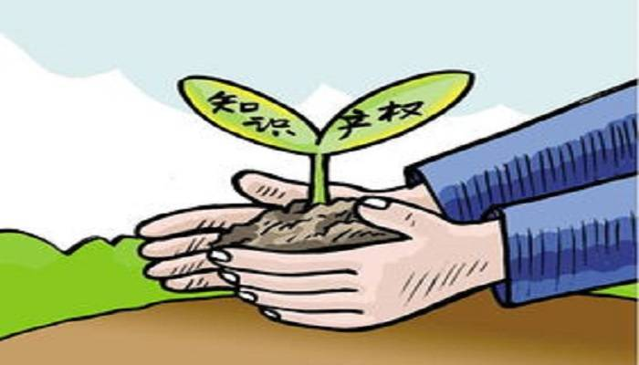 广东各地市知识产权保护亮点频现