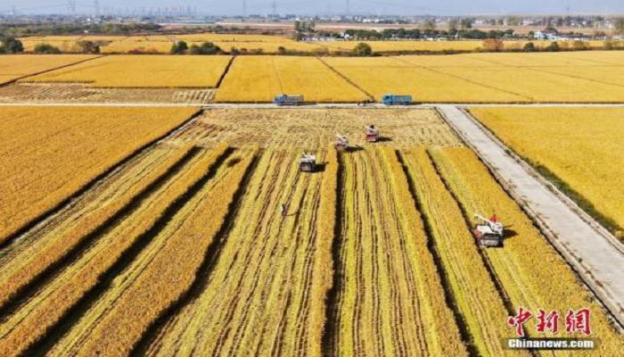 农业农村部:促进区块链、人工智能、5G与农业融合