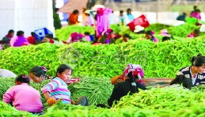农业农村部指导拼多多等企业采购贫困地区百亿农产品