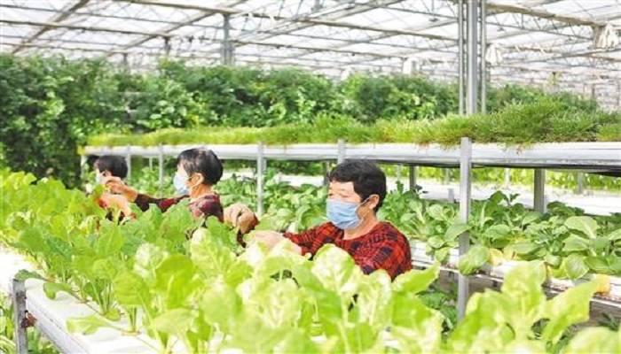 河北邯郸:农业产业化引领乡村振兴